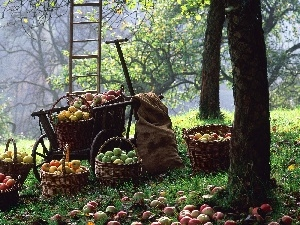 Baskets, apples, orchard