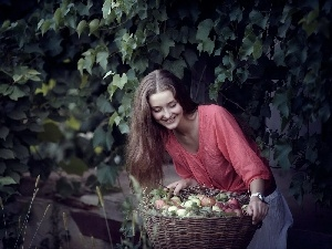apples, basket, Women, harvest, orchard