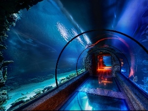 tunnel, Aquarium, immersed