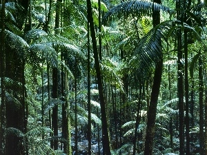 tropical, Australia, forest