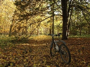 autumn, viewes, Park, Bike, trees