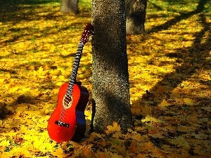 autumn, Leaf, Guitar, forest