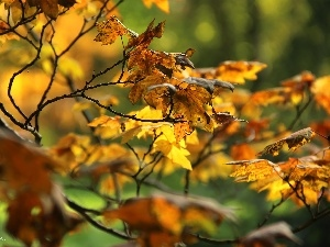 Leaf, autumn, Yellow