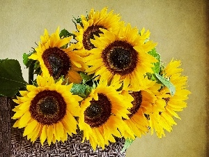 background, Brown, basket, Nice sunflowers
