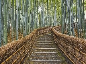 bamboo, viewes, forest, Stairs, trees