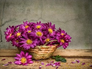 basket, Astra, purple, Flowers