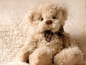 teddy bear, Plush