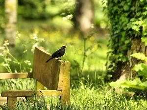 Bench, viewes, Park, Blackbird, trees