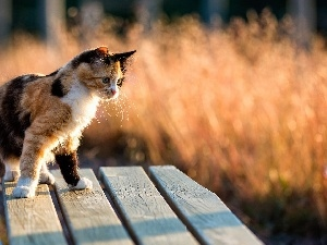 Bench, cat, Mixed-breed dog, color
