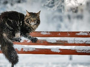 Bench, winter, erect, cat