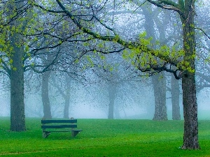 Bench, viewes, Park, Fog, trees