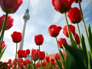 Berlin, Television, Tulips, tower