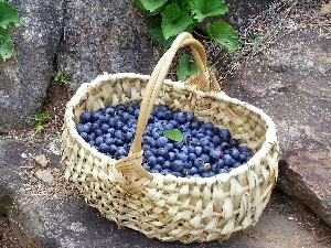 full, berries, basket