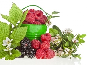 blackberries, raspberries, green ones, Flowers, Bucket