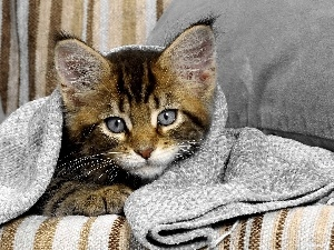 cover, Blanket, cat