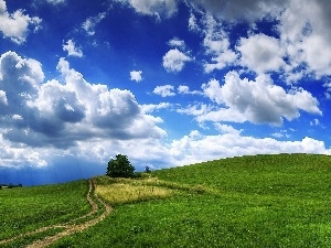 clouds, blue, viewes, Way, Sky, Field, trees