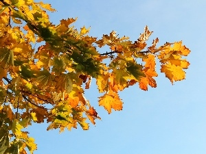blue, Leaf, Yellow, Sky, Autumn