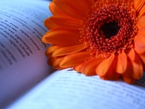 Gerbera, Book, Orange