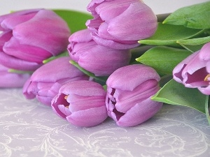 Tulips, bouquet, purple