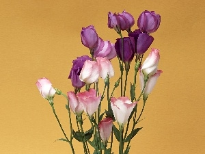 bouquet, Eustoma