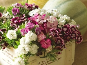 Box, flowers, color, bouquet