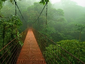 bridge, jungle