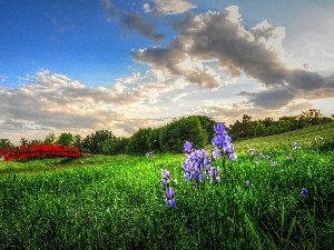 bridges, viewes, Red, Meadow, Irises, trees