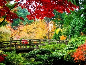 Park, bridges, autumn