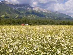 British Columbia, Mountains, Field, Daisies