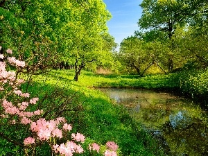 trees, Bush, Pond - car, Meadow, viewes, flower