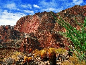 Cactus, canyon, layers, bed-rock