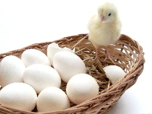 eggs, chicken, basket