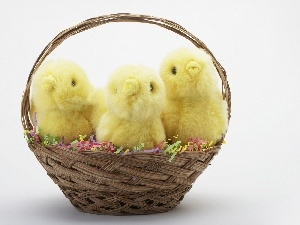 Chicks, basket