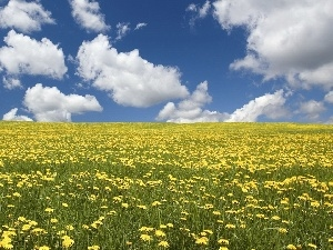 dandelions, clouds, Meadow