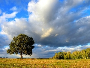 clouds, Bush, lonely, Meadow, trees