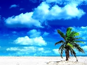 Palm, clouds, Beaches