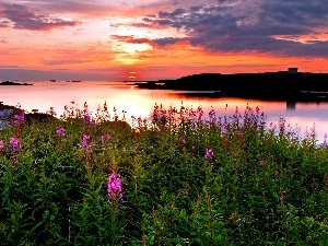 Coast, sun, lake, Flowers, west