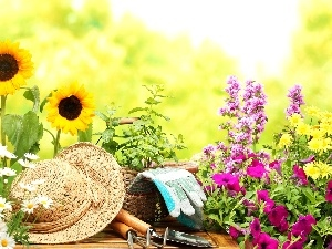 color, Hat, Nice sunflowers, Flowers, chamomile