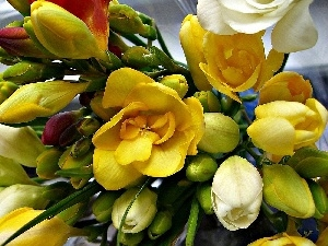 Colorful, freesia, small bunch