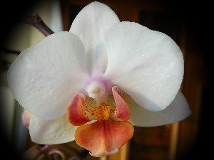 orchid, Colourfull Flowers