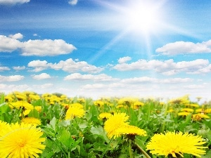 Common Dandelion, Sky, Spring, Meadow