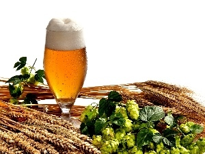composition, hop, Beer, corn