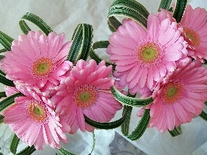 gerberas, composition, Pink