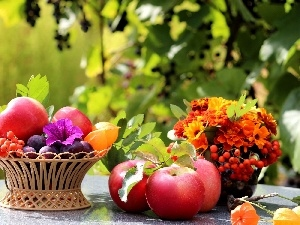 compositions, Plant, Flowers, apples, basket, plums