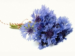 Blue, cornflowers, bunch