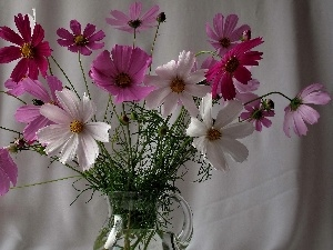 White, Cosmos, purple