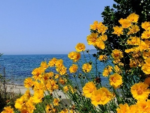 Cosmos, sea, Yellow Honda