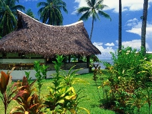 Palms, Cottage, Tropical
