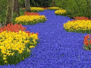 Daffodils, flowers, forest, Tulips, many