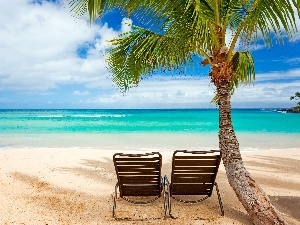 deck chair, Palm, sea, Beaches